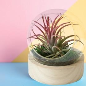 Terrarium socle rond
